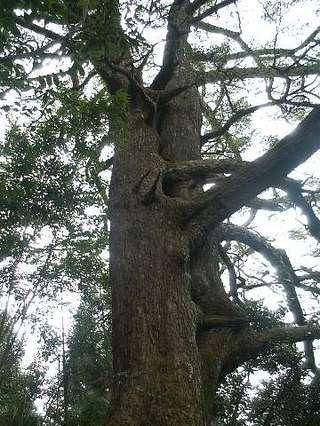 Tree01_1